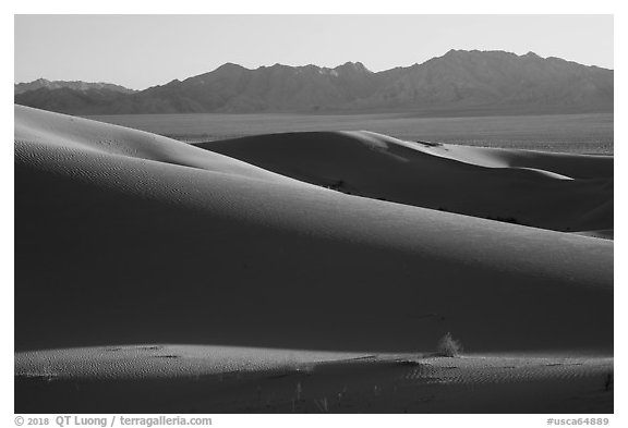 Bush and ridges, Cadiz Sand Dunes. Mojave Trails National Monument, California, USA (black and white)