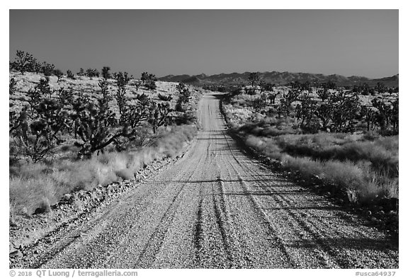 Main road. Castle Mountains National Monument, California, USA (black and white)