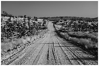 Main road. Castle Mountains National Monument, California, USA ( black and white)