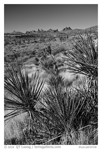 Yuccas and distant Castle Peaks. Castle Mountains National Monument, California, USA (black and white)