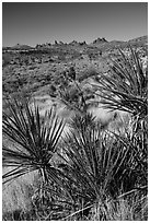 Yuccas and distant Castle Peaks. Castle Mountains National Monument, California, USA ( black and white)