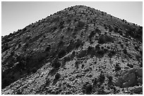 Castle Mountains peak with juniper trees. Castle Mountains National Monument, California, USA ( black and white)