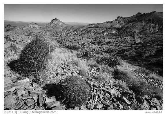 Desert plants, Castle Mountains. Castle Mountains National Monument, California, USA (black and white)