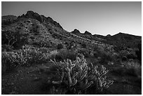 Cactus and Castle Mountains, dusk. Castle Mountains National Monument, California, USA ( black and white)