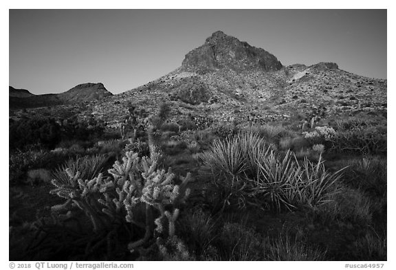 Cactus and Hart Peak, twilight. Castle Mountains National Monument, California, USA (black and white)