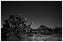 Joshua tree, grasses, and Hart Peak at night. Castle Mountains National Monument, California, USA ( black and white)