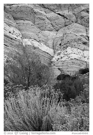Riparian vegetation and cliffs, Whitewater Preserve. Sand to Snow National Monument, California, USA (black and white)