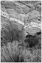 Riparian vegetation and cliffs, Whitewater Preserve. Sand to Snow National Monument, California, USA ( black and white)