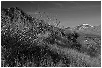 Desert plants and San Gorgonio Mountain in winter, Mission Creek Preserve. Sand to Snow National Monument, California, USA ( black and white)
