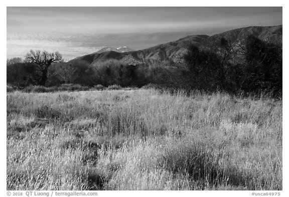 Grassy meadow and San Gorgonio Mountain in winter, Big Morongo Canyon Preserve. Sand to Snow National Monument, California, USA (black and white)