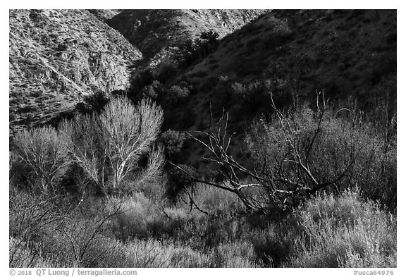 Trees in winter and foothills, Big Morongo Canyon Preserve. Sand to Snow National Monument, California, USA (black and white)