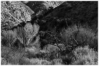 Trees in winter and foothills, Big Morongo Canyon Preserve. Sand to Snow National Monument, California, USA ( black and white)
