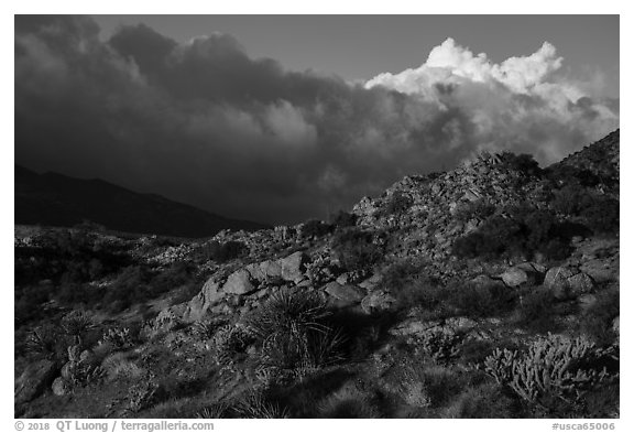 Desert plants and early morning storm clouds. Santa Rosa and San Jacinto Mountains National Monument, California, USA (black and white)