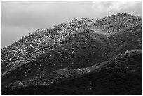 Ridge with snow-covered pines, Santa Rosa Mountains. Santa Rosa and San Jacinto Mountains National Monument, California, USA ( black and white)