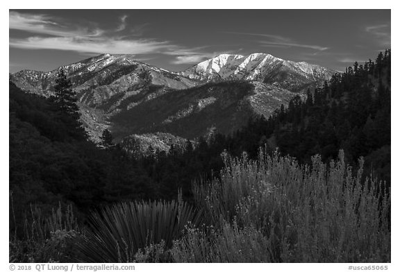 Desert shrubs, pine forests, and  Mount San Antonio. San Gabriel Mountains National Monument, California, USA (black and white)