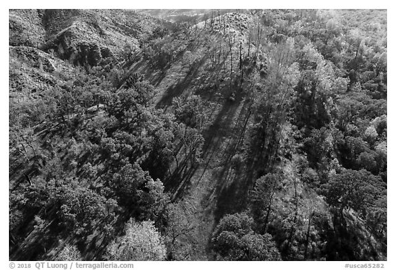 Aerial view of hillside, Cache Creek Wilderness. Berryessa Snow Mountain National Monument, California, USA (black and white)