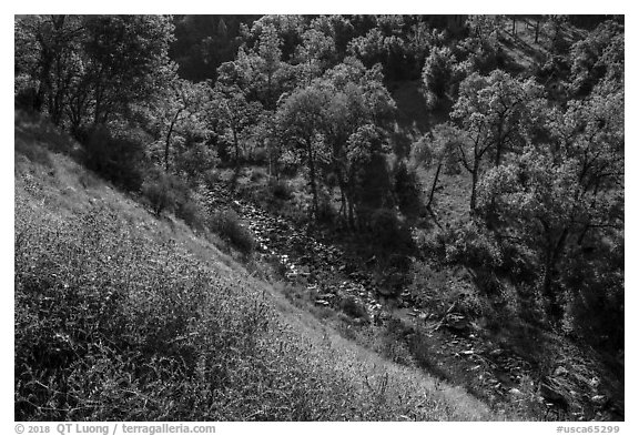 Wildflowers above Eticuera Creek. Berryessa Snow Mountain National Monument, California, USA (black and white)