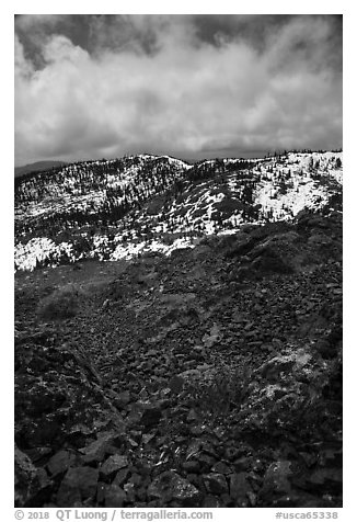 Alpine flowers on Snow Mountain summit. Berryessa Snow Mountain National Monument, California, USA (black and white)