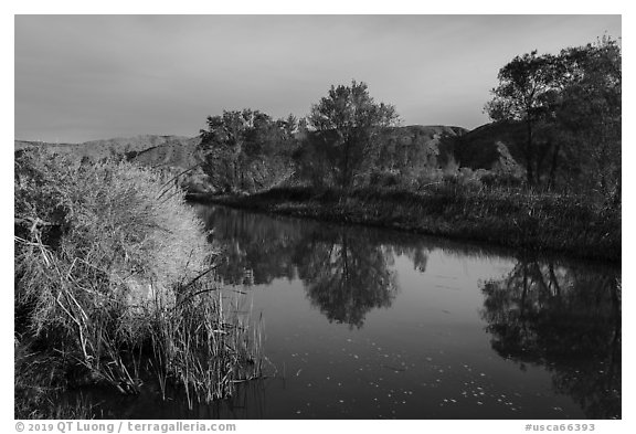 Cottonwood trees reflected in Mojave River. Mojave Trails National Monument, California, USA (black and white)