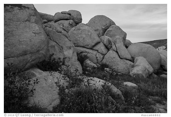 Wildflowers and boulders. Sand to Snow National Monument, California, USA (black and white)