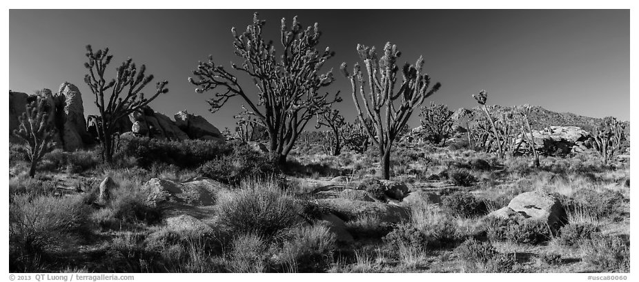 Desert landscape with Joshua trees, rocks, and distant mountains. Mojave National Preserve, California, USA (black and white)