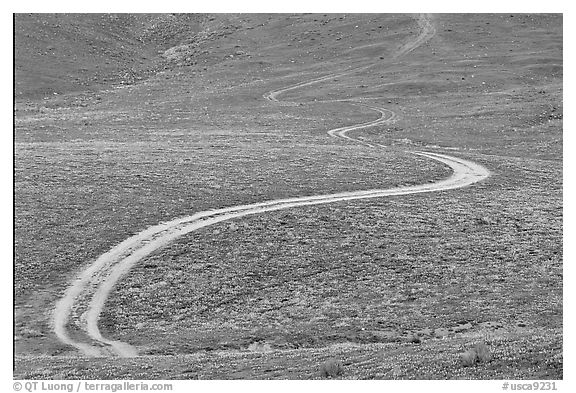 Curving unpaved road, hills W of the Preserve. Antelope Valley, California, USA (black and white)
