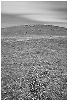 Hills W of the Preserve, covered with multicolored flowers. Antelope Valley, California, USA (black and white)