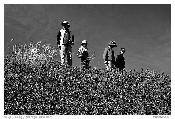 Family strolling in a field of lupines. Antelope Valley, California, USA (black and white)