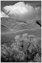 Trees, verdant hills,  Gorman Hills. California, USA ( black and white)