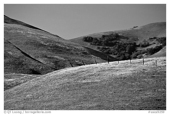 Gorman Hills in the spring. California, USA (black and white)