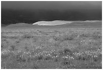 Meadow with closed poppies under a stormy sky. Antelope Valley, California, USA (black and white)