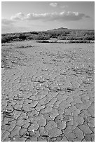 Wildflowers growing out of cracked mud flats. Antelope Valley, California, USA (black and white)