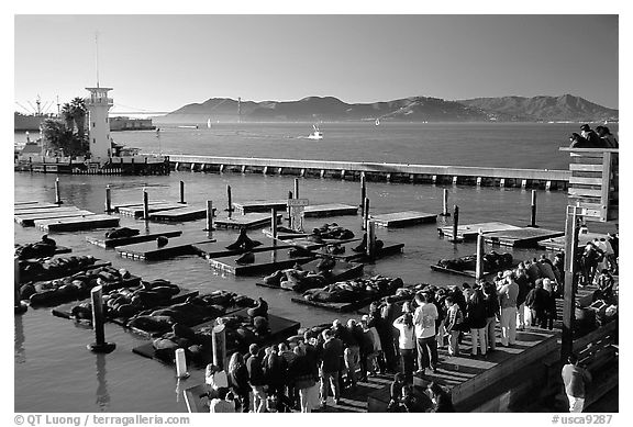 Tourists watch Sea Lions at Pier 39, late afternoon. San Francisco, California, USA (black and white)