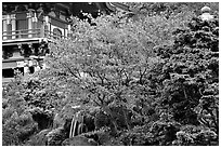 Red maple and pagoda detail, Japanese Garden, Golden Gate Park. San Francisco, California, USA (black and white)