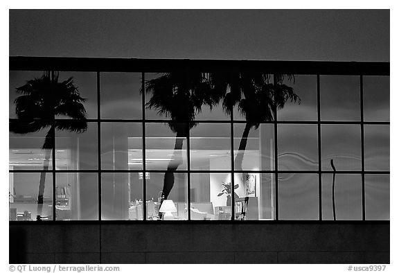 Palm Trees reflected in large bay windows at sunset. San Francisco, California, USA (black and white)