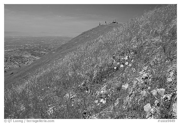 Wildflowers near  the summit of Mission Peak, Mission Peak Regional Park. California, USA (black and white)