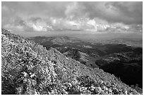 Looking towards green hills from the summit after a snow storm, Mt Diablo State Park. California, USA ( black and white)