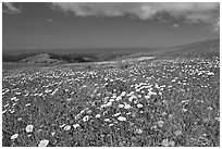 Meadows in the spring, with the Pacific ocean in the distance,  Russian Ridge Open Space Preserve. Palo Alto,  California, USA ( black and white)