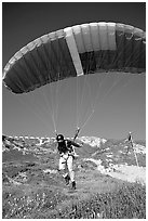 Paraglider launching, the Dumps, Pacifica. San Mateo County, California, USA ( black and white)