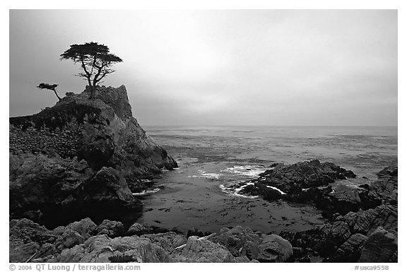Lone Cypress Sunset Seventeen Mile Drive Pebble Beach