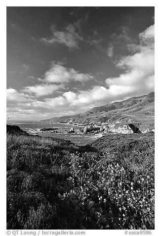 Wildflowers and rocky coast, Garapata State Park. Big Sur, California, USA (black and white)