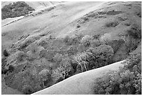 Rolling Hills in spring near San Luis Obispo. Morro Bay, USA ( black and white)