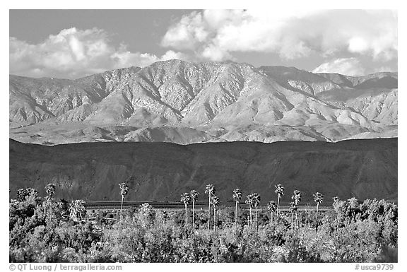 Palm Trees and mountains. Anza Borrego Desert State Park, California, USA (black and white)