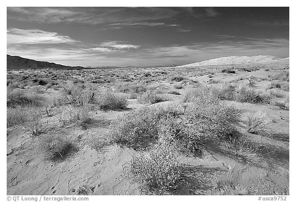 Bushes and Kelso Dunes. Mojave National Preserve, California, USA