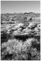 Desert grasslands. Mojave National Preserve, California, USA ( black and white)