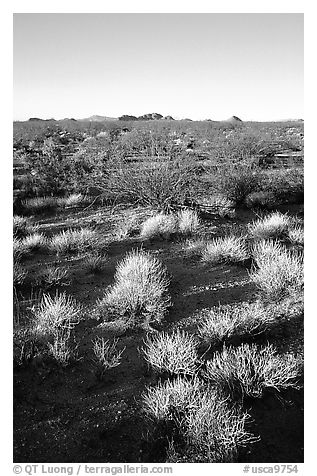 Sage bushes on flats. Mojave National Preserve, California, USA (black and white)