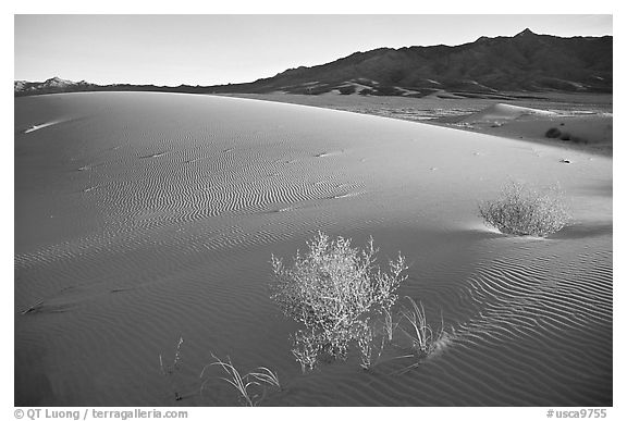 Kelso Dunes, sunset. Mojave National Preserve, California, USA (black and white)