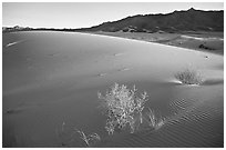 Kelso Dunes, sunset. Mojave National Preserve, California, USA ( black and white)