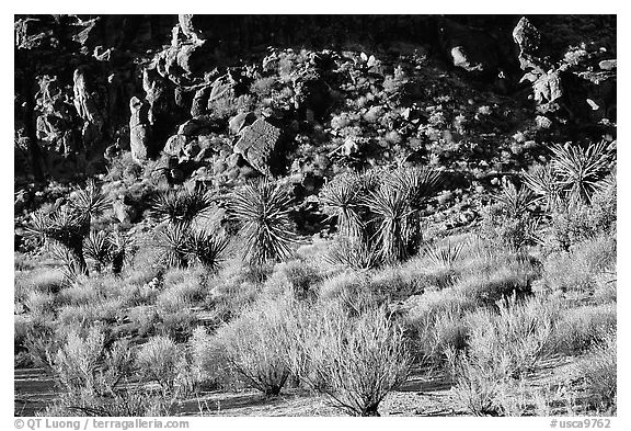 Desert plants and rock formations, Hole-in-the-Wall. Mojave National Preserve, California, USA (black and white)