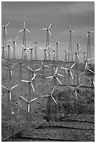 Windmill farm, Tehachapi Pass. California, USA (black and white)
